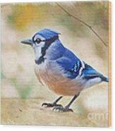 Blue Jay - Digtial Paint Wood Print