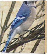 Blue Jay In A Bush Wood Print