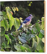 Blue Jay In A Tree Wood Print