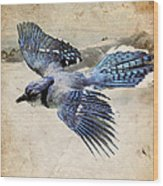 Blue Jay In Flight Wood Print by Ray Downing