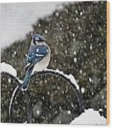 Blue Jay In Snow Storm Wood Print