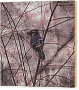 Blue Jay In The Willow Wood Print