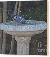 Blue Jay Loves To Splash Water Wood Print