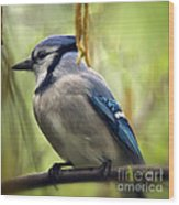 Blue Jay On A Misty Spring Day - Square Format Wood Print