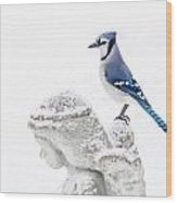 Blue Jay On An Angel Wood Print
