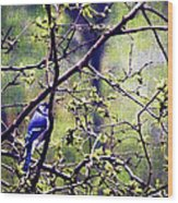 Blue Jay - Paint Effect Wood Print