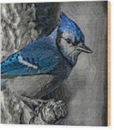 Blue Jay Painterly Wood Print
