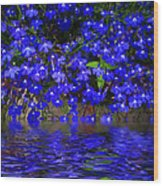 Blue Lobelia Wood Print