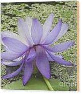 Blue Lotus Seen From Behind Wood Print
