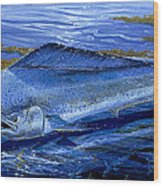 Blue Mahi Off0071 Wood Print