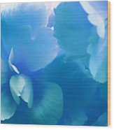 Blue Melody Begonia Floral Wood Print by Jennie Marie Schell