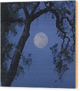 Blue Moon Horse And Oak Tree Wood Print