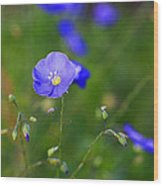 Blue Morning Flowers Wood Print