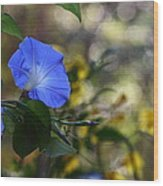Blue Morning Glories Wood Print by Linda Unger