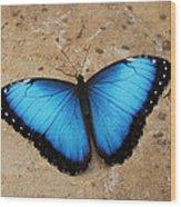 Blue Morpho #2 Wood Print