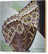Blue Morpho Butterfly Costa Rica Wood Print