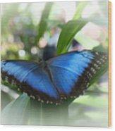 Blue Morpho Butterfly Dsc00575 Wood Print
