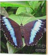 Blue Morpho I Wood Print