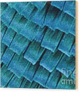 Blue Morpho Wing Scales Wood Print