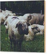 Blue Mountain Sheep Wood Print