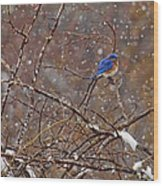 Blue Norther Wood Print