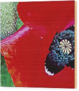 Blue Opium Wood Print