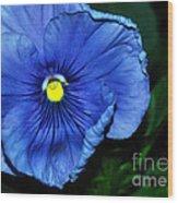 Blue Pansy Wood Print