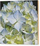 Blue Pastel Floral Art Prints Hydrangea Flowers Wood Print