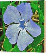 Blue Periwinkle In Rocca Al Mare Open Air Museum-estonia Wood Print