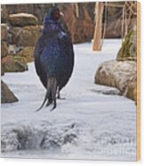 Blue Pheasant  Wood Print