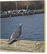 Blue Pigeon Wood Print