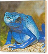 Blue Poison Dart Frog Wood Print