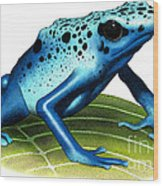 Blue Poison Dart Frog Wood Print