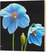 Blue Poppy Flowers # 4 Wood Print