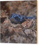Blue Racer Snake Wood Print