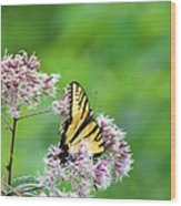 Blue Ridge Butterfly Wood Print