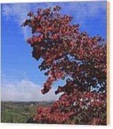 Blue Ridge Mountains In Alabama Wood Print