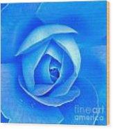 Blue Rose Macro Shot Wood Print