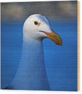 Blue Seagull Wood Print