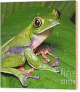 Blue-sided Tree Frog Wood Print
