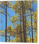 Blue Skies And Golden Aspen Trees Wood Print