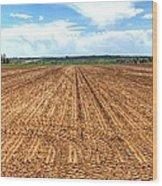Blue Sky And Field 14567 Wood Print