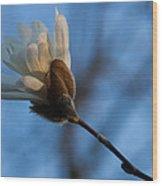 Blue Sky Magnolia Blossom - Dreaming Of Spring Wood Print