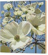 Blue Sky Spring White Dogwood Flowers Art Prints Wood Print