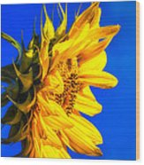 Blue Sky Sunshine Sunflower Wood Print
