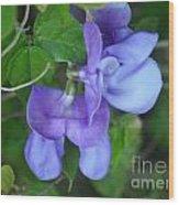 Blue Snail Vine Twins Wood Print