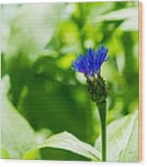 Blue Spot In The Green World - Featured 3 Wood Print
