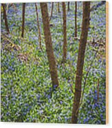 Blue Spring Flowers In Forest Wood Print
