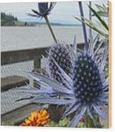 Blue Star Sea Holly Wood Print