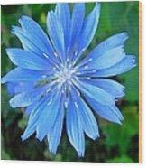 Blue Star Wood Print